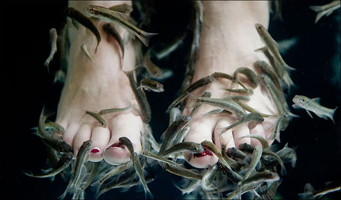 All i want for christmas is 10 minutes in a garra rufa for Fish pedicures near me